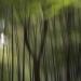 Allusive Japan Trees